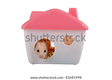 Hamster looks out of the house isolated on a white background - stock photo