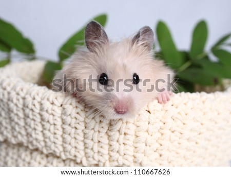 hamster on a light background and mountain ash leaves - stock photo