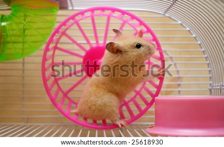 Hamster running in a wheel - stock photo