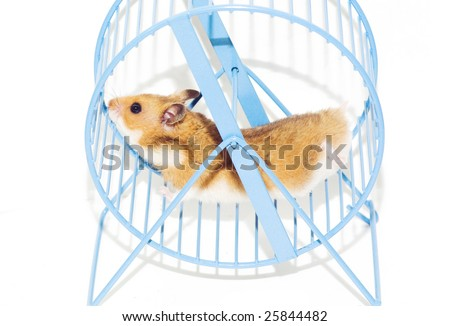hamster running in the wheel - stock photo