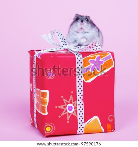 Hamster sitting on the present box isolated on pink background