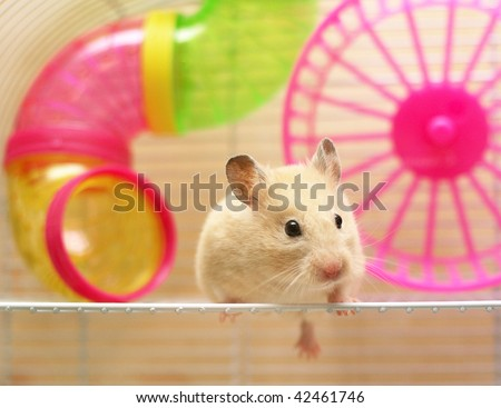 hamster still sits in a cage - stock photo