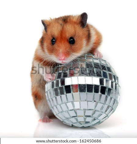 hamster with a ball isolated on a white background  - stock photo