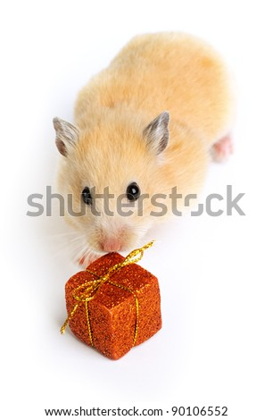 Hamster with present isolated on white - stock photo