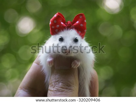 Hamster with red bow