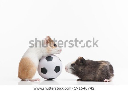 Hamsters. Funny hamsters playing with soccer ball - stock photo