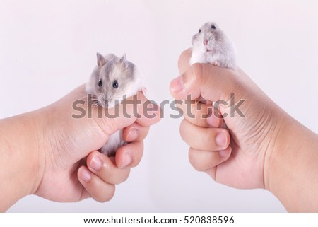 Hamsters in Two hand on background.
