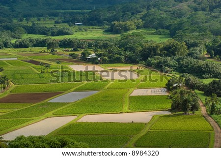 Hanalei River flows through the Taro Taro fields near the historic Haraguchi Rice Mill on Kauai, Hawaii. The fields are illuminated by sunlight filtering through storm clouds. - stock photo