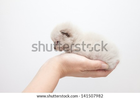 Hand and cat in white background - stock photo