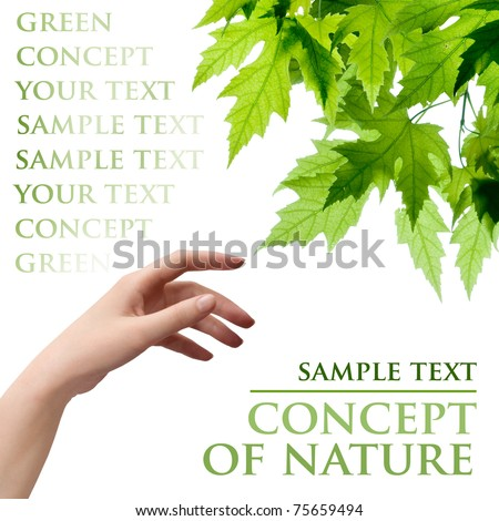 hand and leafs - stock photo