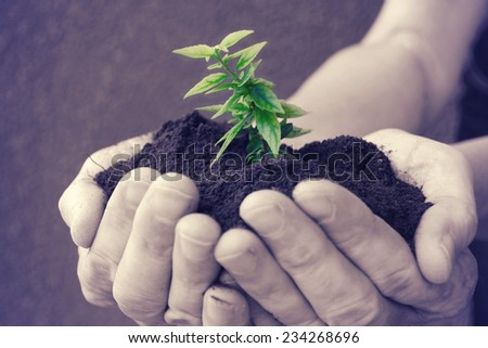 Hand and plant,heart.  - stock photo