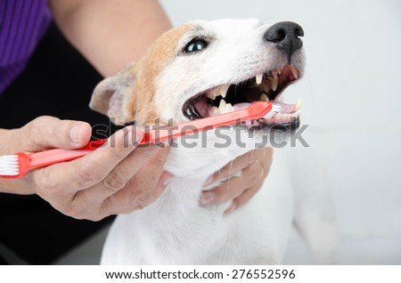 hand brushing dog's tooth for dental care - stock photo