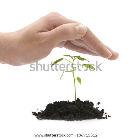 hand covering young plant over white - stock photo