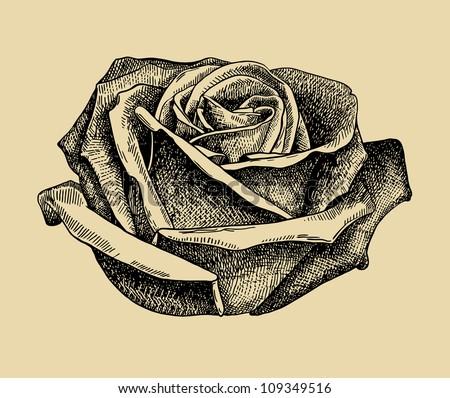 hand draw sketch rose. Raster version - stock photo