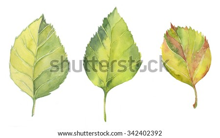 Hand draw watercolor yellow and green leaves - stock photo