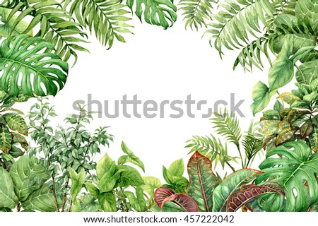 Hand drawn branches and leaves of tropical plants. Natural green ...