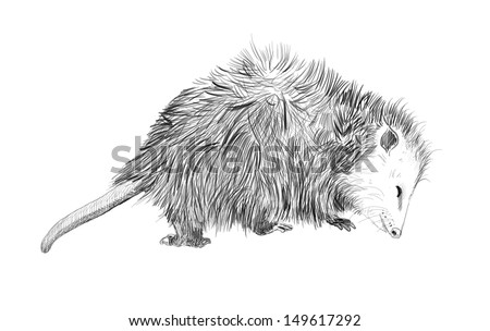 hand drawn cute animal, sketch of adorable wildlife creature, funny opossum isolated on white background - stock photo