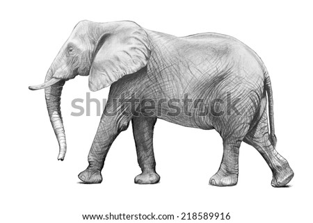 hand drawn elephant sketch isolated on white background, African elephant with big ears, trunk and wrinkled skin illustration. Zoo animal.