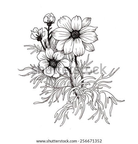 Hand drawn garden flowers isolated on white background