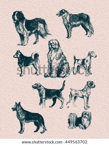 hand drawn graphics set breeds of dogs: husky, St. Bernard, greyhound, South Russian Shepherd, terrier, boxer, Russian Hound, Pekingese, German Shepherd, line art