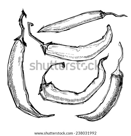 Hand drawn illustration -  Hot chili peppers. Set. Isolated on white. - stock photo
