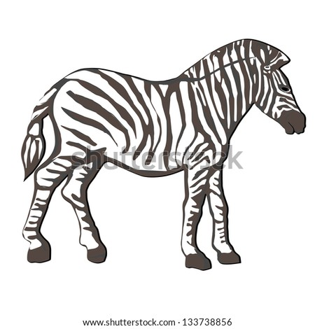 Hand drawn illustration of a zebra with tassel tail, cartoon over white