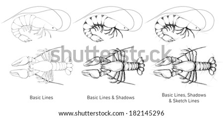 Hand drawn Lobster and Pacific Shrimp - stock photo