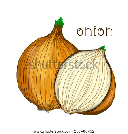 Hand drawn onion isolated on white background. Raster version - stock photo
