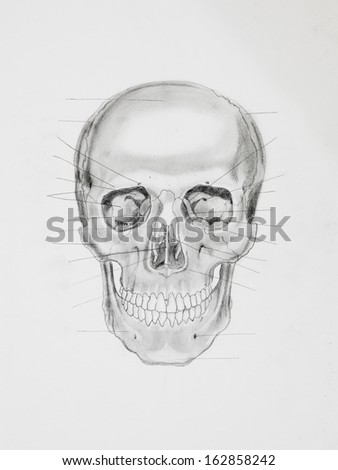 hand drawn pencil illustration, front view of human skull with directive lines pointing at bone parts, on white paper