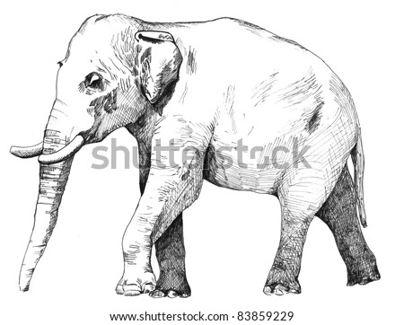 hand drawn sketch of asian elephant illustration done in black ink and isolated on white background - stock photo