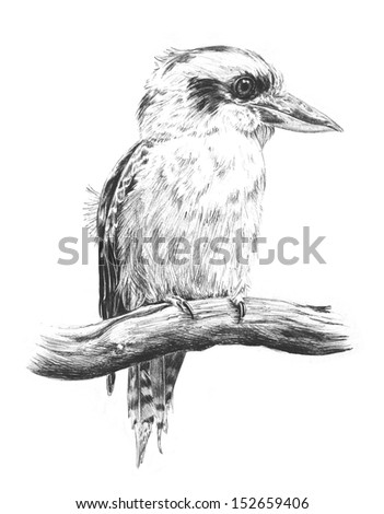 hand drawn sketch of Australian kingfisher or Laughing Kookaburra perched on a branch watching, pencil sketch illustration of bird wildlife from Australia, cute funny animal drawing, bird eye and beak - stock photo