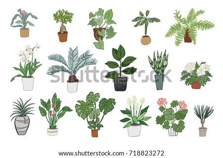 hand drawn tropical house plants scandinavian style illustration doodle flowers