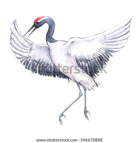 Handdrawn Watercolor Drawing Japanese Dancing Crane Stock ... - photo#23