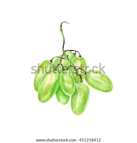 Hand drawn watercolor Green grape fruit. Can be used as a greeting card for background, birthday, mother's day and so on. Romantic background for web pages, wedding invitations, wallpaper.