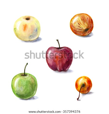 Hand drawn watercolor illustration. Fruits set. Various apples isolated on white background.