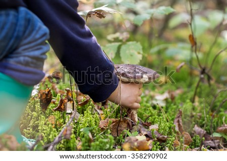 Hand gathering a brown cap boletus in autumn forest. Image with selective focus