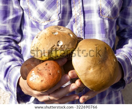 hand girl in plaid shirt holding a bunch of mushrooms - stock photo