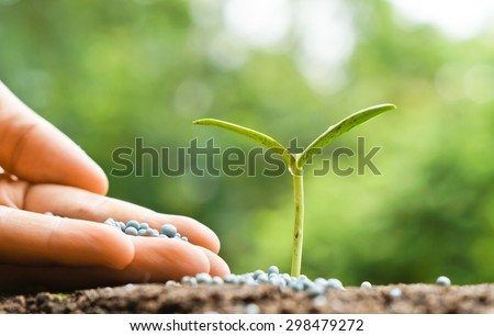 hand giving chemical fertilizer to baby  plant on soil / nurturing baby plant - stock photo