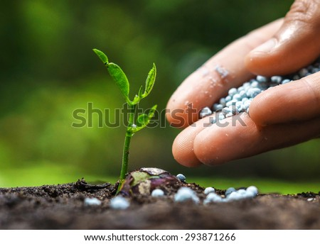 hand giving chemical fertilizer to plant on soil / nurturing baby plant - stock photo