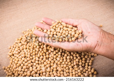 hand hold soy bean studio shot with flax background - stock photo