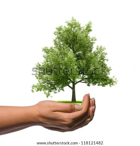 Hand holding a big tree with isolated background - stock photo