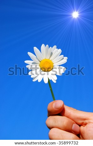 hand holding a daisy in front of a blue sky - stock photo