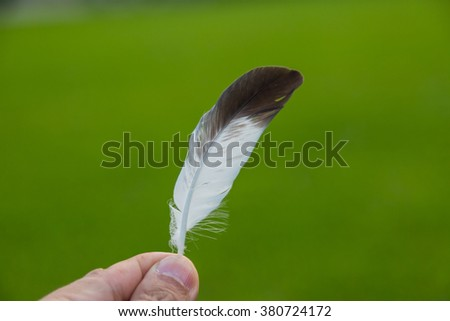 Hand holding a feather in front of green natural background - stock photo