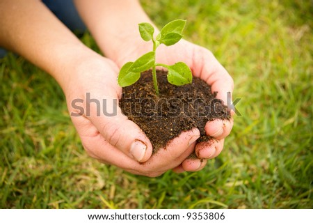 hand holding a green plant on soil - stock photo