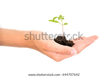 Hand holding a growing young baby plant isolated on white background, new life, gardening, environment and ecology concept