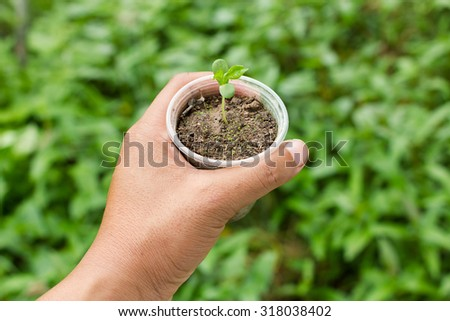 hand holding a little green tree plant