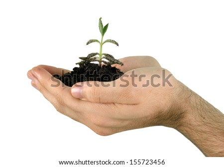 hand holding a plant, giving meaning of environmental stewardship
