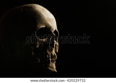 hand holding a real skull is isolated on black background - stock photo