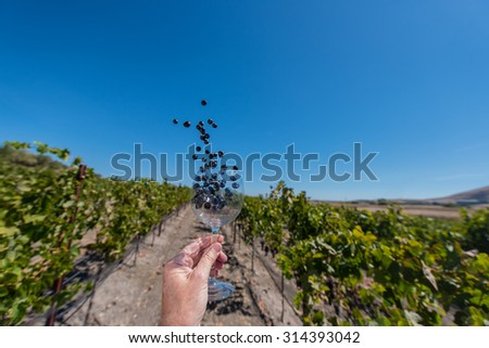 Hand holding a  red wine glass with grapes flying out in a vineyard - stock photo