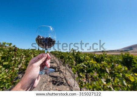 Hand holding a  red wine glass with grapes in a vineyard - stock photo